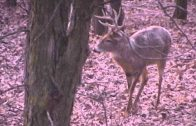Bow Hunting Whitetail Buck in Western Missouri