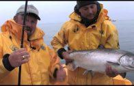 British Columbia Chinook Salmon