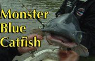 Monster Blue Catfish