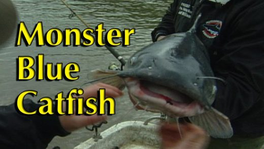 Monster Blue Catfish
