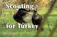 Scouting for Turkey with Lee Clark