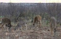 Youth Texas Whitetail Hunt: Part 2